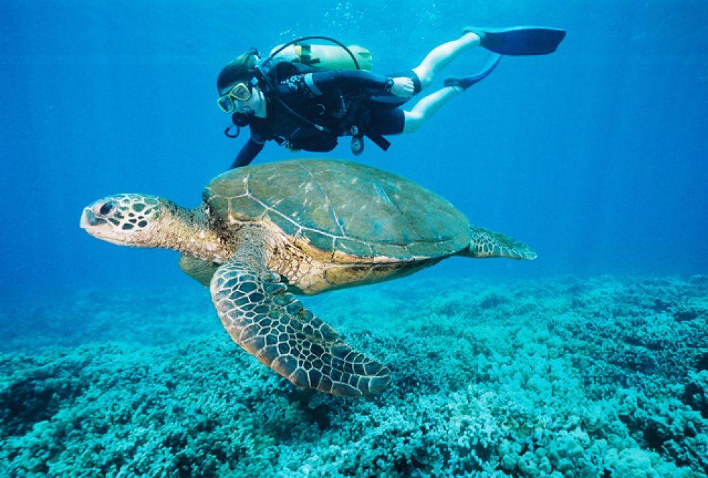 Europe Seals Bv Scuba Diving